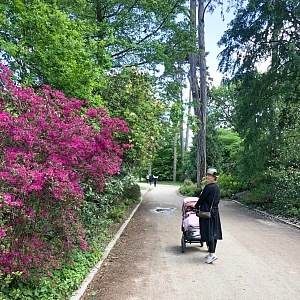 Walk in the Paris flower garden