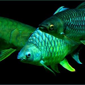 Češi jsou milovníci rybaření.