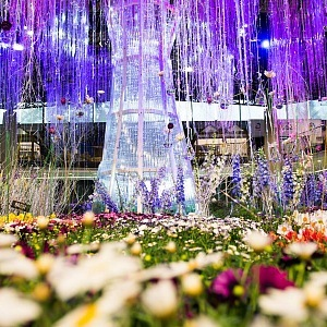 Flowers in Olomouc