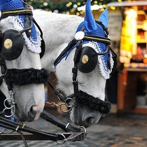 Koně na Staroměstském náměstí