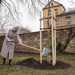 Na počest Olgy Havlové vysadil Výbor dobré vůle 85 stromů.