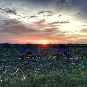 Lotosová farma
