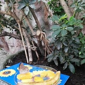 V Motýlím domě můžete obdivovat desítky druhů