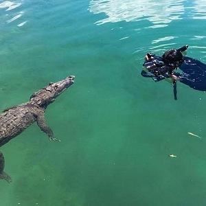 Z krokodýlů má sice respekt, ale nebojí se k nim přiblížit.