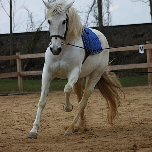 Jezdecký klub Horse Mane
