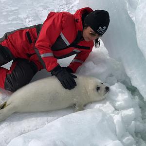 Tuleni za chvíli nebudou mít kde žít.