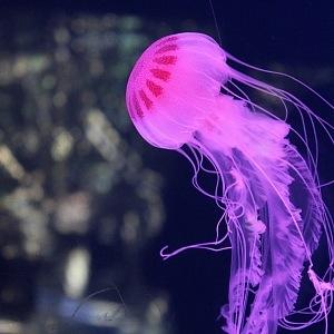 Podvodní říše medúz