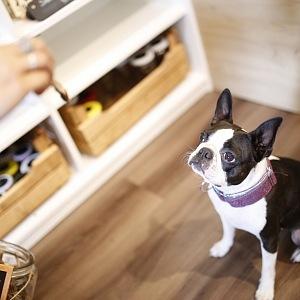 Prodejnu DOGG psi milují!