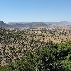 Stromy Argania Spinosa v Maroku