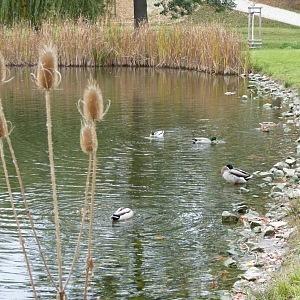 Zelený rybník ve Stromovce