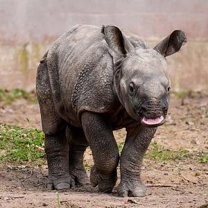 The Rhino Teenager