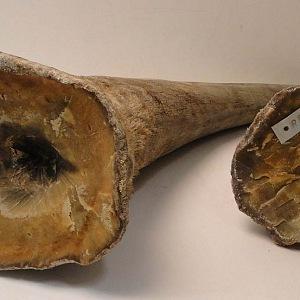 Rohy nosorožců