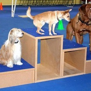 Dogs in hotels play and compete