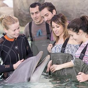 Setkání s delfínem.