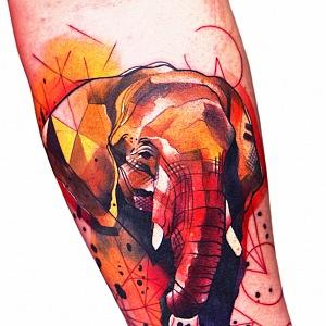 Slon.